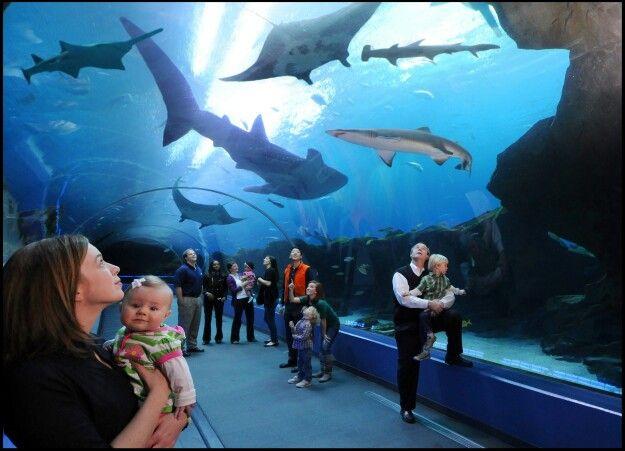 World's largest aquarium, Georgia