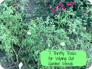 Thrifty Tips for Killing Garden Weeds Frugal Gardening Tips