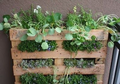 Pallet with plants! Great idea.//