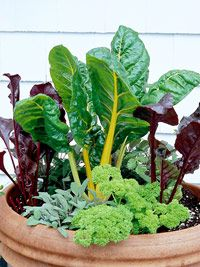 Best herbs to put together in a container garden from BHG.