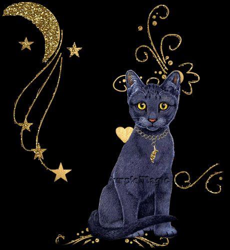 Анимашки коты картинки, днем рождения давиду