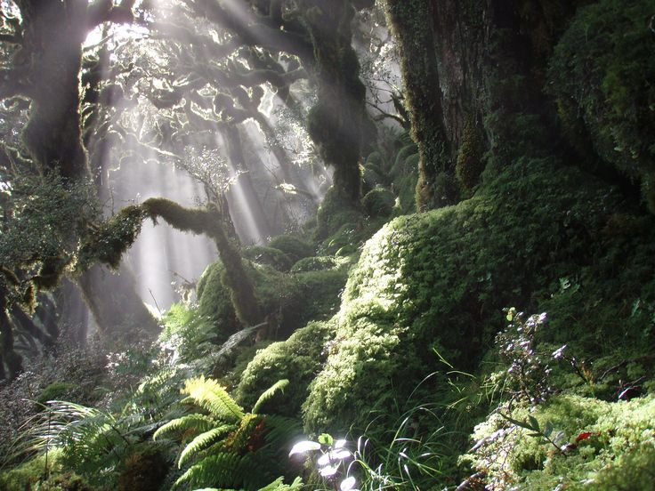 Tararua Ranges on the North Island, New Zealand.