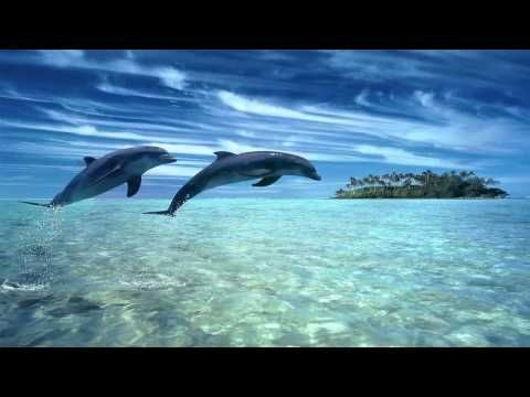 SLEEP Music: CALM : RELAX: TIME OUT: MEDITATE - dolphin sounds and waves - Musica para Bebes - YouTube