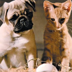"Milo in ""The Adventures of Milo and Otis"" (1989)"