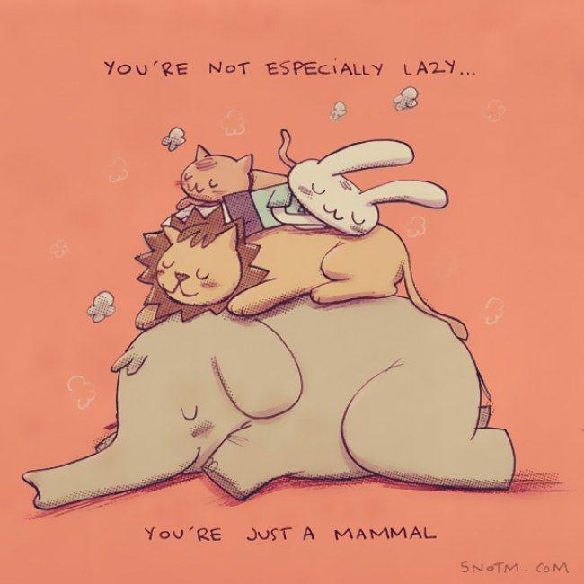 Você não é especialmente preguiçoso. É apenas um mamífero. Coisas que ninguém me disse - Alex Noriega