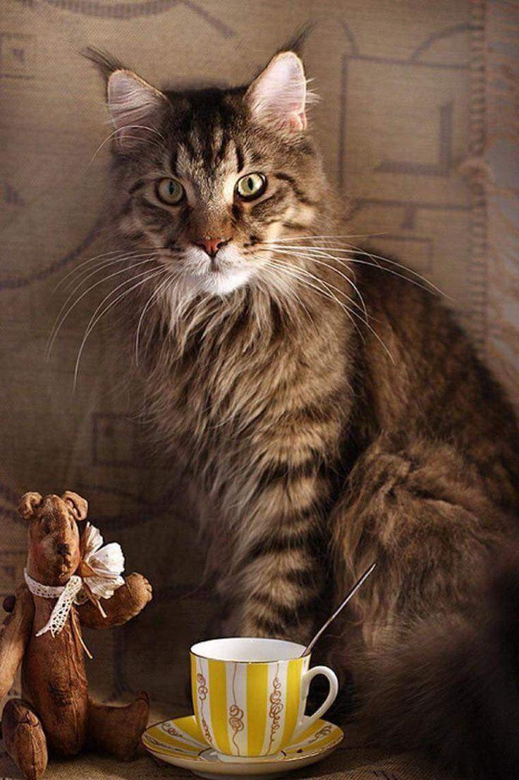 276 best Cats images on Pinterest