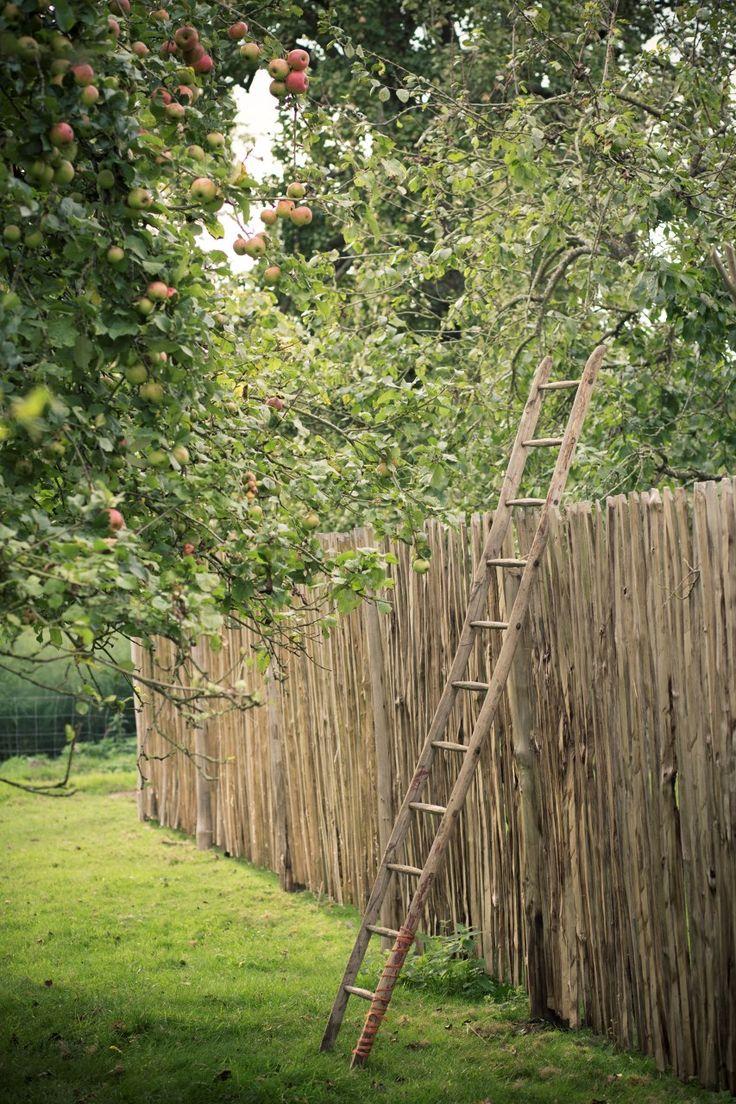 Oltre 25 fantastiche idee su giardini di cottage su for Idee di progettazione cottage lago
