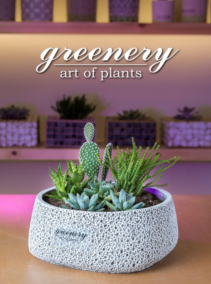 Centerpiece with succulents!  #greenery #greeneryartofplants #succulents #cactus #plants #chania #crete