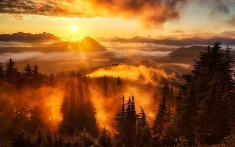 erdő felhő fény hegy