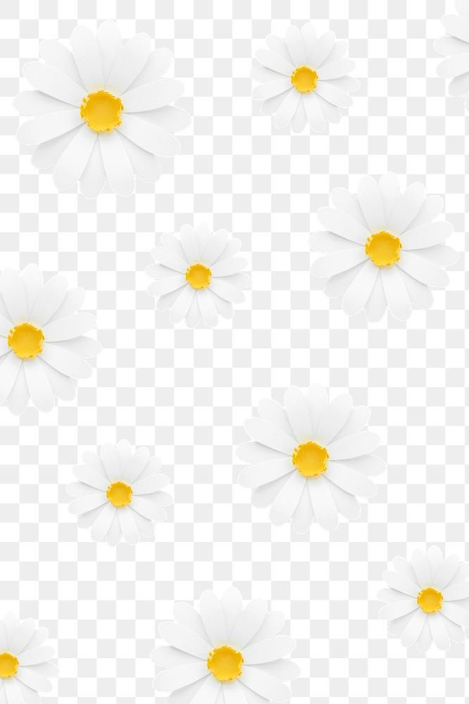 White Daisy Pattern Transparent Png Premium Image By Rawpixel Com Nam Pink Daisy Wallpaper Floral Banners Daisy Wallpaper
