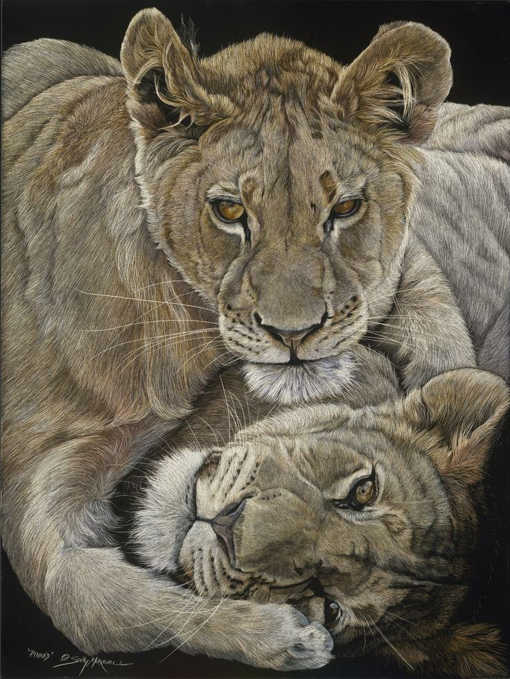 Pinned by Sally Maxwell, master scratchboard artist ~ lion cubs