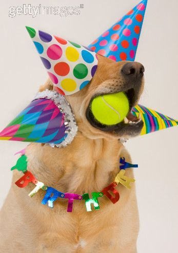 canine dog party party hat hat animals in hats party hat pinterest