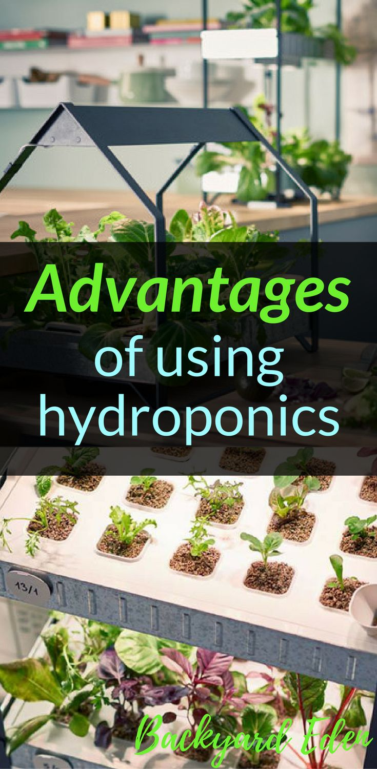 Advantages of using hydroponics |  Hydroponics | DIY Hydroponics | Hydroponics for beginners | Indoor Hydroponics | Hydroponic Wall | Hydroponic System | Hydroponic Gardening | Homemade Hydroponic systems | Hydroponic Nutrients | Kratky Hydroponics | Greenhouse Hydroponics | Hydroponics Design | Hydroponic Vegetables | Backyard-Eden.com #hydroponics #hydroponicsystem #hydroponicgardening #hydroponicvegetables #backyardeden