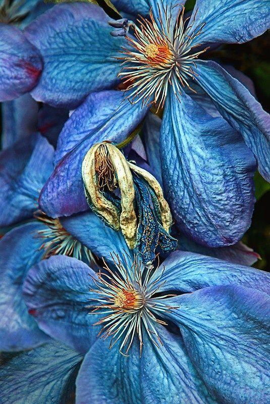 Wilted Petals