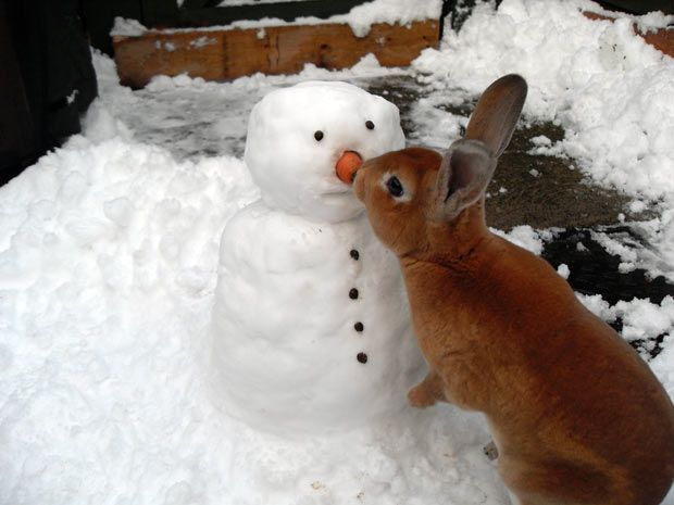"""""""Oh Frosty, thank you for the carrot"""""""