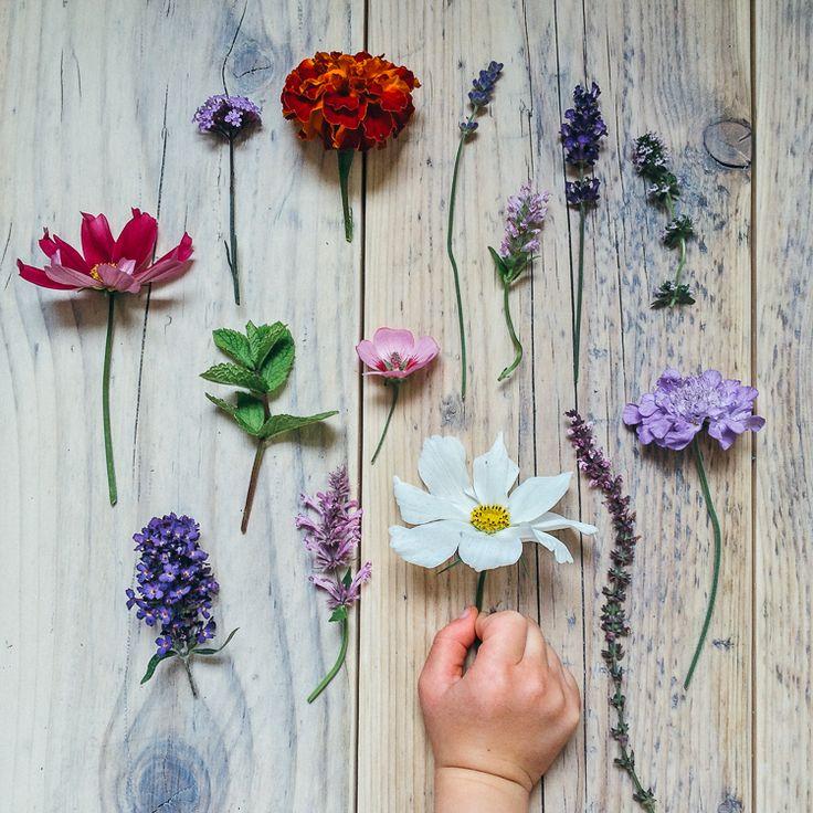 Butterfly friendly plants - geoffrey and grace