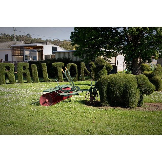 Railton is a quaint little town in Tasmania's North West known for its topiary. There's elephants, farmers, sharks and even a Tasmanian Tiger. #tasmania #discovertasmania #railton #topiary  Image Credit: Cassandra Leigh