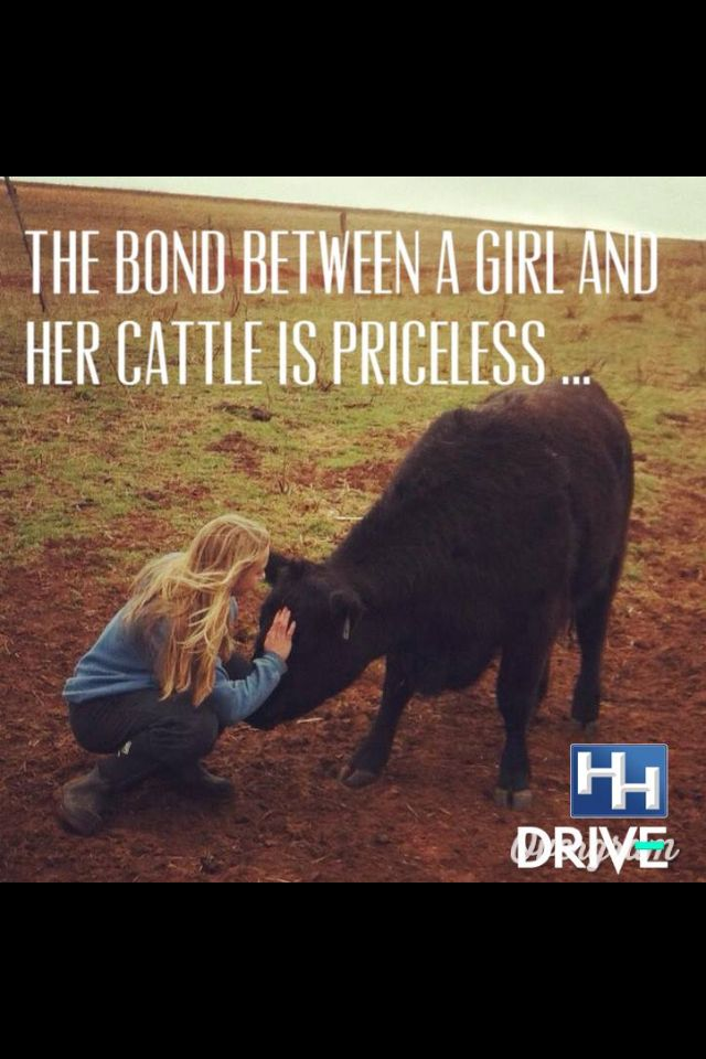 Lol the bond between this cowgirl and her cattle is dinner at the end of spring