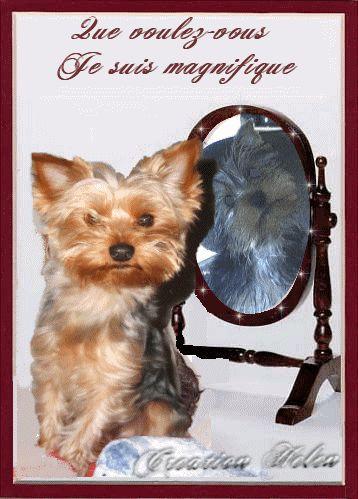 même les chiens sont charmant.