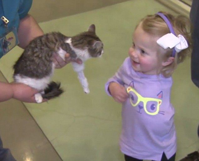 Scarlette Tipton, two, from California, had to have her left arm removed at the shoulder aged just ten months, but is learning to adjust to her condition with the help of three-legged rescue cat Doc.