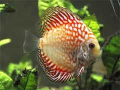 Best 25 Tropical Fish Ideas On Pinterest Fish Colorful