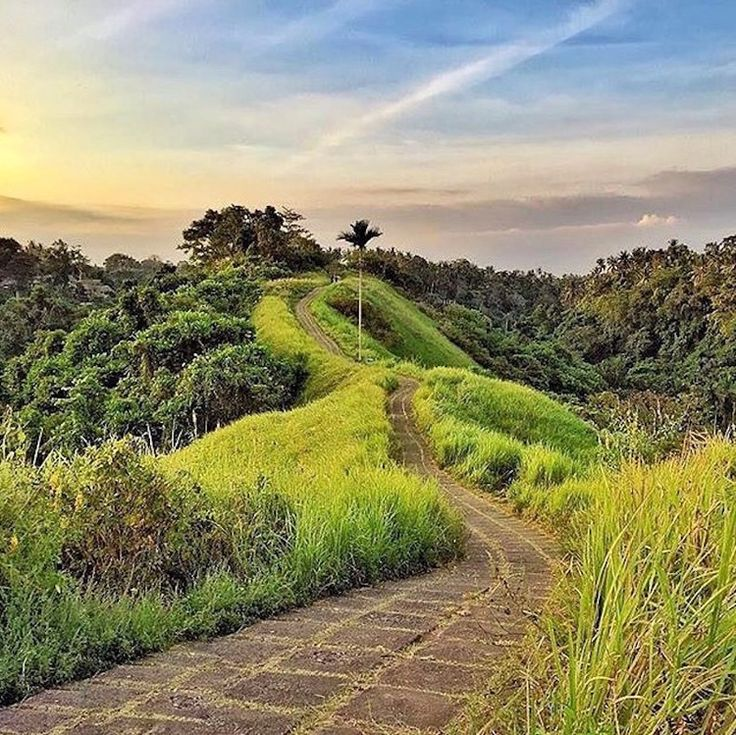 Campuhan Ridge Walk Central Ubud (not seminyak)