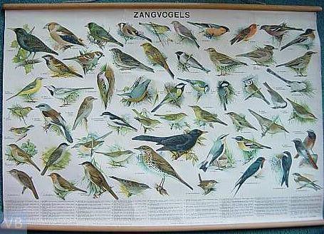 ONDERWIJSGESCHIEDENIS kaart van de zangvogels.