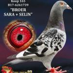 "165 - B17-6261739 ""BROER SARA + SELIN"" ♂ | De Duif"