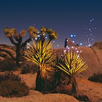 Hier glitzern die Lightmarks über Wüstenpflanzen. Die beiden Fotografen sehen sich die Schauplätze bei Tag an, um sie in der Nacht in rechte Licht rücken zu können (Foto von: Cenci Goepel und Jens Warnecke)