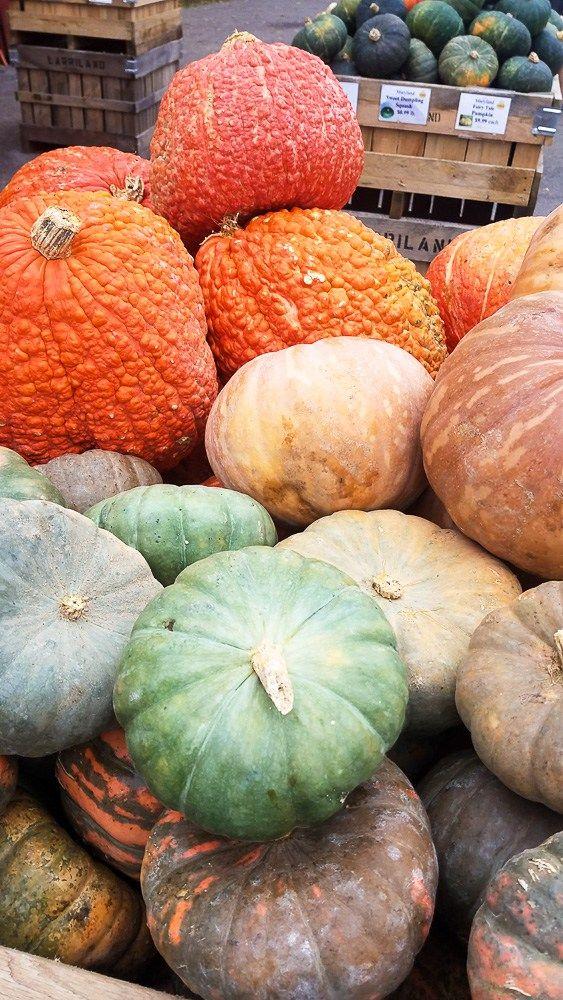 die besten 25 types of pumpkins ideen auf pinterest. Black Bedroom Furniture Sets. Home Design Ideas