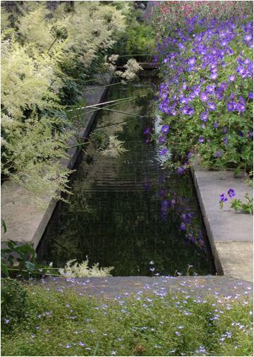 Pond. Palmerston Garden