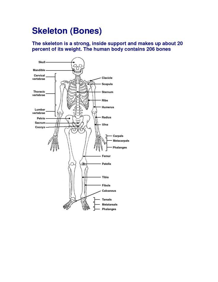 bones in human body pdf