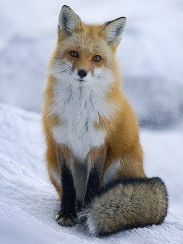 Winter Animal Tours New Hampshire