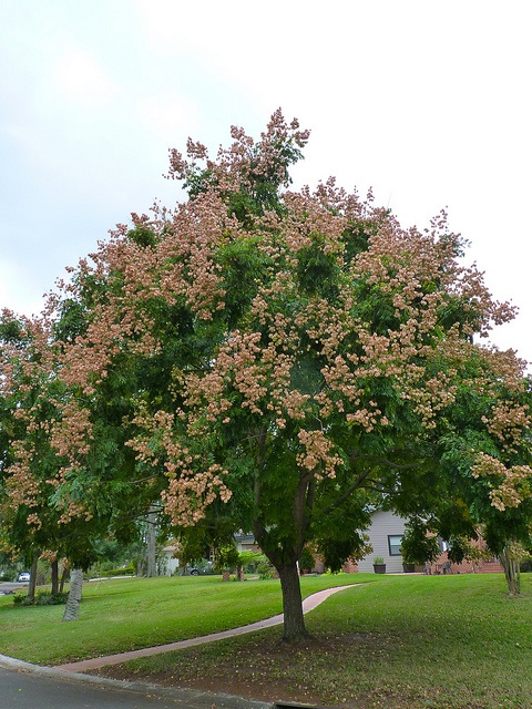 Find This Pin And More On Patio Trees Native To North America By  Allstongardener.