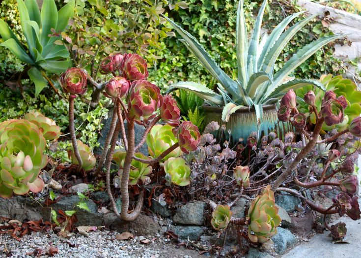 Debra Lee Baldwin shows the progression of part of her succulent garden, from initial planting through refreshing and regrowth, over five years. Debra, a gar...