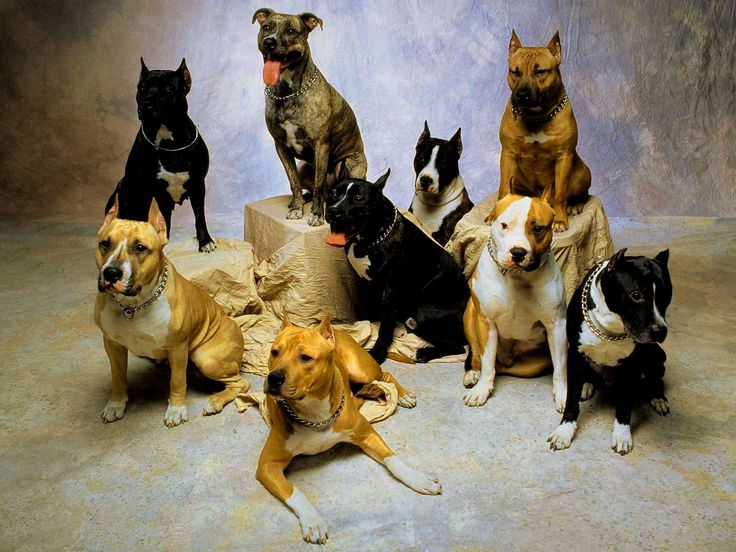 Dog Breed Wallpaper