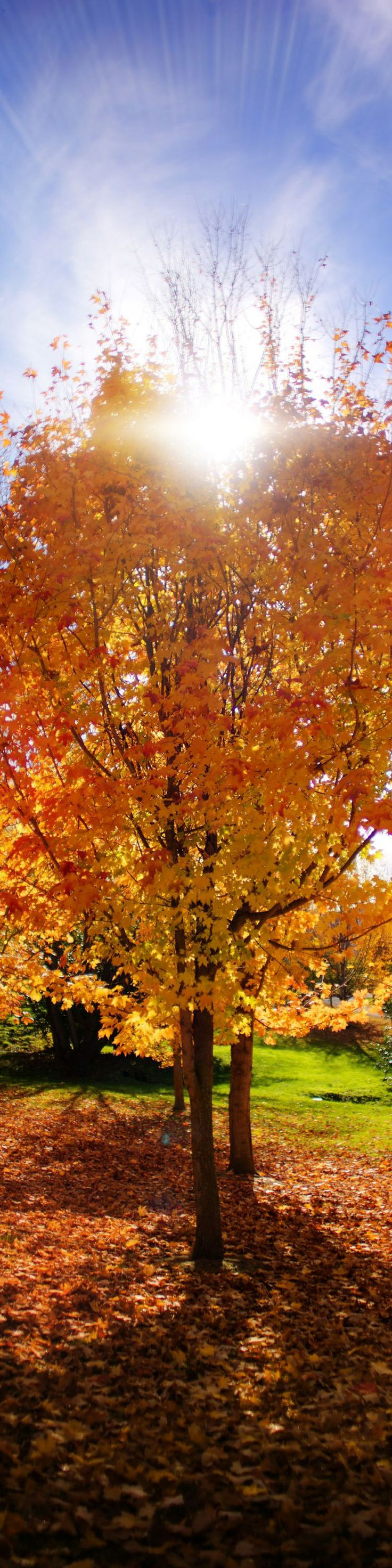 17 best images about Autumn in New