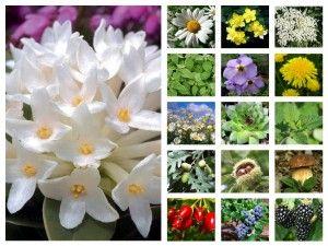 biljni svet srbije