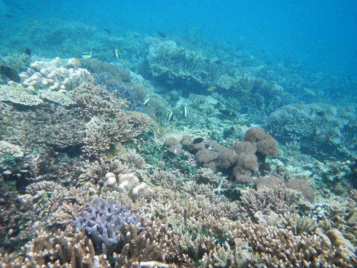 Underwater nusa lembongan island, Bali -  Indonesia