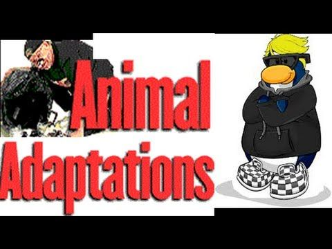 Adaptations in Animals-Cartoon Video lesson for kids