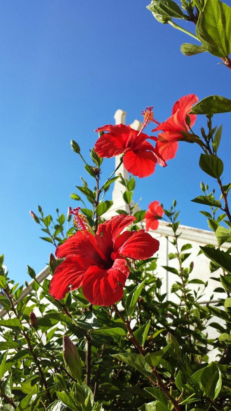 NEL LETTO DEL VENTO: Visitare Ustica: incantesimo mediterraneo