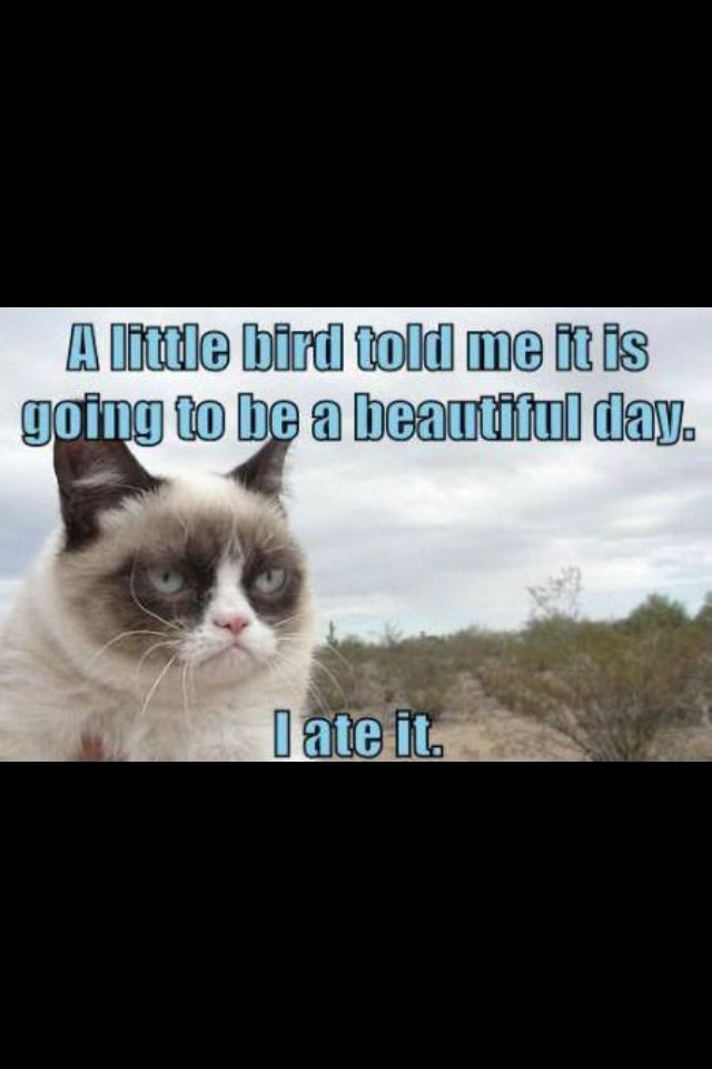 grumpy cat wedding invitations%0A Grumpy cat