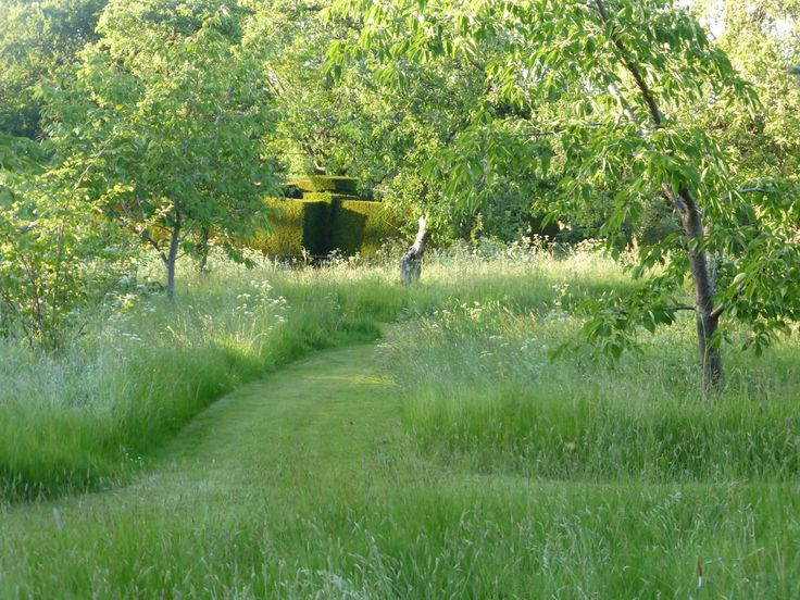 17 best images about wild garden on pinterest gardens for Wild grass gardens