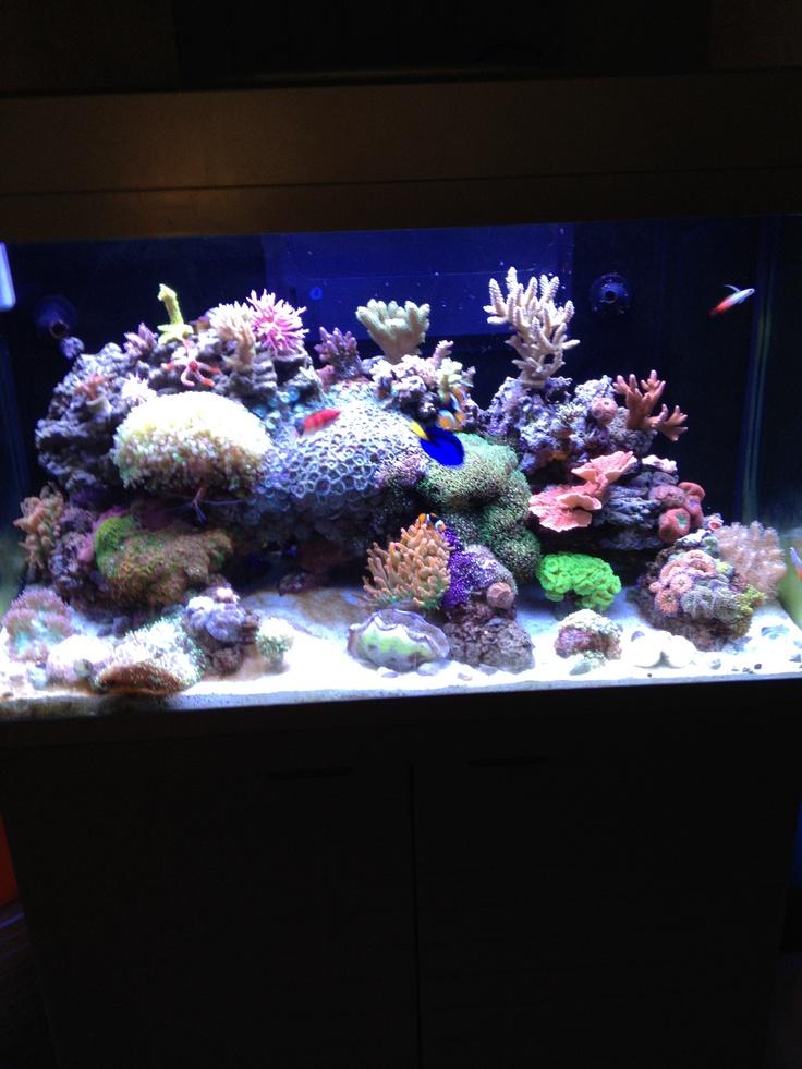 1000 images about aquarium on pinterest salts red sea. Black Bedroom Furniture Sets. Home Design Ideas