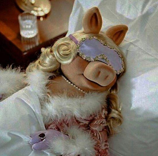 Best 25 Muppet Meme Ideas On Pinterest: 25+ Best Ideas About Miss Piggy Meme On Pinterest