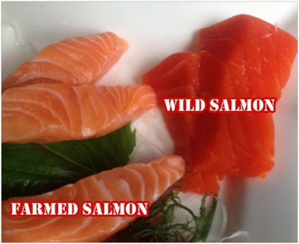 Farmed Salmon – One Of The Most Toxic Foods In The World Is Fed Toxins Not Approved Anywhere In The World