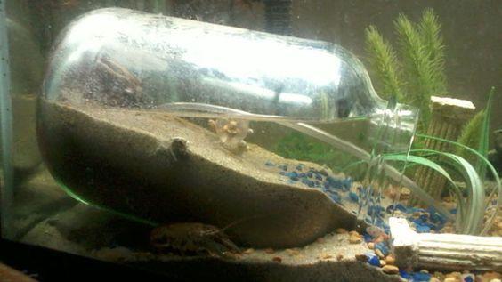 Underwater dry zone for mini crabs in fish tank.