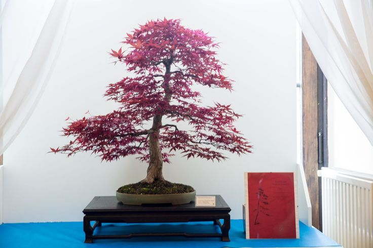During the festival there is a National Bonsai Exhibition - the biggest in Poland!