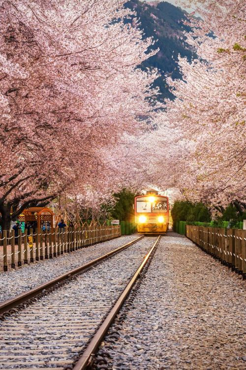 Gyeonghwa Station in Jinhae, South Korea   by Aaron Choi