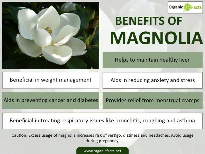 Magnolia Has The Ability To Treat Menstrual Cramps Improve Respiratory Health D Menstrual Cramps Remedies For Menstrual Cramps Essential Oil Menstrual Cramps